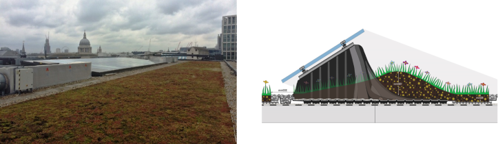 SCB green roof